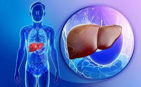images Karaciğeri Taklit Eden Haplar