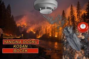 2014 08 chiwaukum creek fire 300x199 DUMAN DEDEKTÖRÜ KULLANAN YANGIN BÖCEĞİ