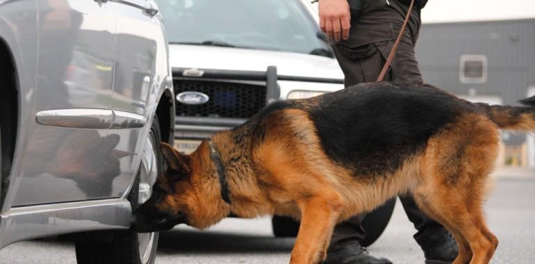 detection dog trainer school 770x380 HAZIR OLUN! KÖPEK BURNUNU TAKLİT EDEN DEDEKTÖRLER GELİYOR!