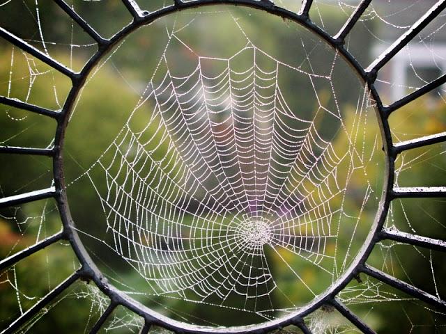spider web1 ÖRÜMCEKLERDEN ÇEVRE KİRLİLİĞİNE VE UÇAK KAZALARINA ÇÖZÜM