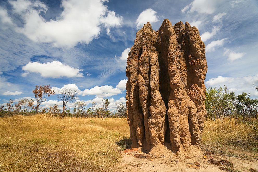 termitemounds large.jpg.990x0 q80 crop smart TERMİT ÇENESİ, MERMİ HIZINDA